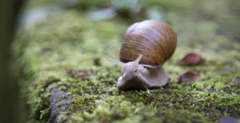 snail-1281633_1920